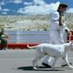 El Perro 08
