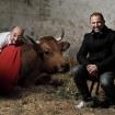 la-vache-4